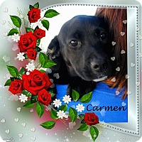 Adopt A Pet :: Carmen - Crowley, LA