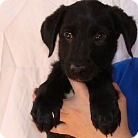 Adopt A Pet :: Cassidy - Oviedo, FL