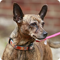 Adopt A Pet :: Kellie *Adoption Hold* - Kettering, OH