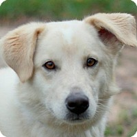 Adopt A Pet :: Angie - ADOPTION PENDING - Bedminster, NJ