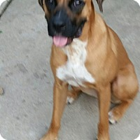 Adopt A Pet :: Sofee - Hillside, IL