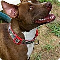 Adopt A Pet :: Skye - Richland Hills, TX