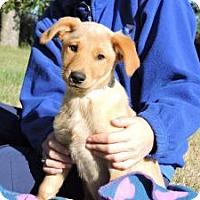 Adopt A Pet :: Pawly - Berkeley Heights, NJ