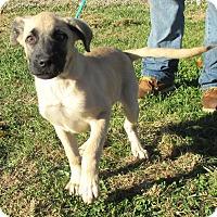 Adopt A Pet :: Button - Reeds Spring, MO