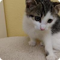 Adopt A Pet :: Fifi - Flagstaff, AZ