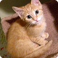 Adopt A Pet :: A..  Kane - Mooresville, NC