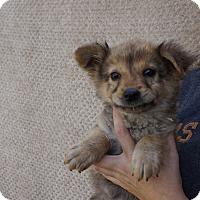 Adopt A Pet :: Fuzzie - Oviedo, FL