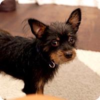 Adopt A Pet :: Fergus - Marina del Rey, CA