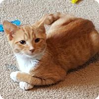 Adopt A Pet :: A..  Orsona - Mooresville, NC