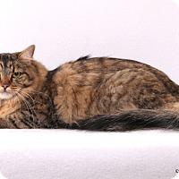 Adopt A Pet :: Olivia - Las Vegas, NV