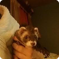 Adopt A Pet :: Cate - VERNON, TX