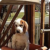 Adopt A Pet :: Ayden - Leesburg, VA