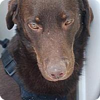 Adopt A Pet :: Brody - N. Berwick, ME