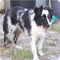 Adopt A Pet :: Chaz - Orlando, FL