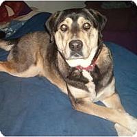 Adopt A Pet :: Max(2) - North Jackson, OH