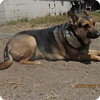 Adopt A Pet :: Zoom - Laingsburg, MI