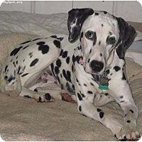 Adopt A Pet :: Cammie - Newcastle, OK