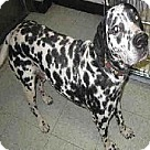 Adopt A Pet :: Garth