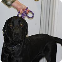 Adopt A Pet :: Wayne - Buffalo, WY