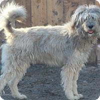 Adopt A Pet :: Carrisbrooke - Norwalk, CT