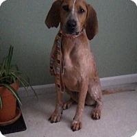 Adopt A Pet :: Rain 2015 (m/c) - Chesterfield, MI