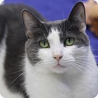 Adopt A Pet :: Jasper - Chicago, IL