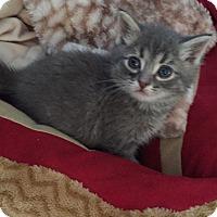 Adopt A Pet :: Sam - Union, KY