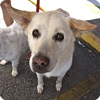 Adopt A Pet :: Callie - Homewood, AL