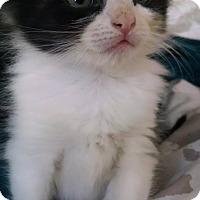 Adopt A Pet :: Blanch - Brooklyn, NY