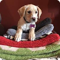 Adopt A Pet :: Jambo - Los Angeles, CA