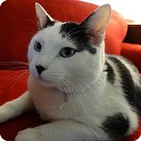 Adopt A Pet :: Sir Charlie Chaplin - Davis, CA