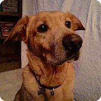 Adopt A Pet :: Doe (Dakota)-ADOPTED - Livonia, MI