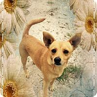 Adopt A Pet :: Dixie - Corinth, NY