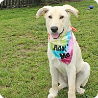 Adopt A Pet :: Natasha (VA) - Hooksett, NH