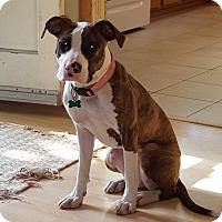 Adopt A Pet :: Stella - Aurora, IL