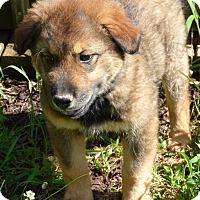 Adopt A Pet :: Bart - Bedminster, NJ