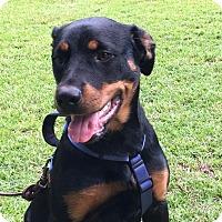 Adopt A Pet :: Zammy - Alachua, GA