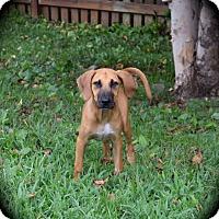 Adopt A Pet :: Abilene - Ijamsville, MD