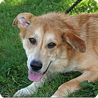 Adopt A Pet :: Excel - Joliet, IL