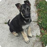 Adopt A Pet :: SPYDER - Winnipeg, MB