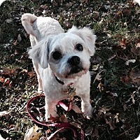 Adopt A Pet :: Lorelei - Bridgewater, NJ
