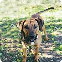 Adopt A Pet :: Bishop - Stanton, MI