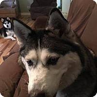 Adopt A Pet :: Stormie - Shingleton, MI