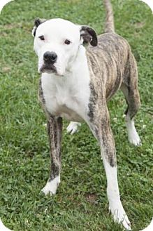 Dog Training Bedford Indiana