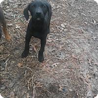 Adopt A Pet :: Luna - Spring, TX
