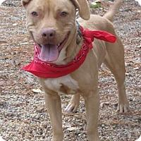 Adopt A Pet :: Spanky - Voorhees, NJ