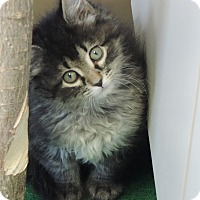 Adopt A Pet :: Malfoy - Brookings, SD