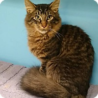 Adopt A Pet :: Scooby - Austintown, OH