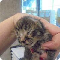 Adopt A Pet :: SNAP - Lacombe, LA