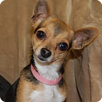 Adopt A Pet :: Zaylee - Richmond, IN